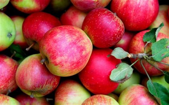 apples_2327493b